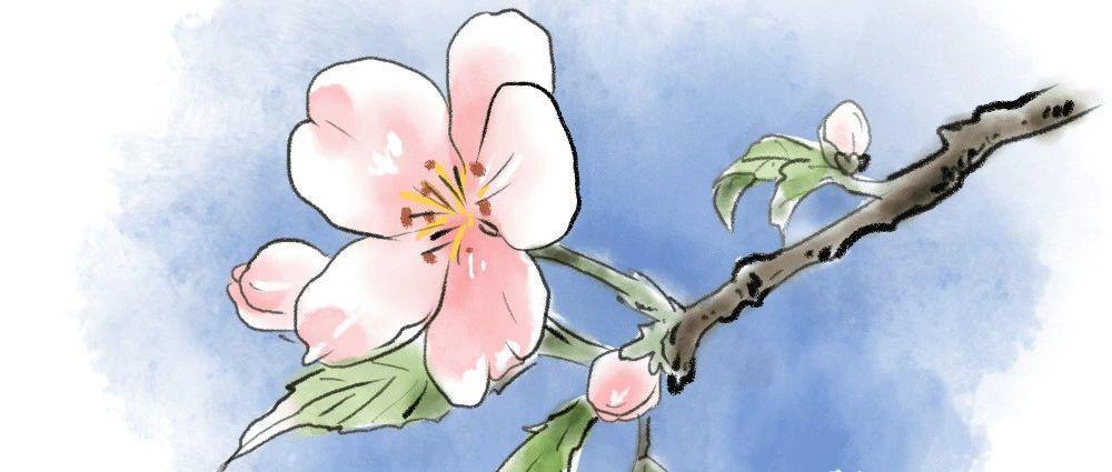 【Scratch编程】第十讲:樱花飘落