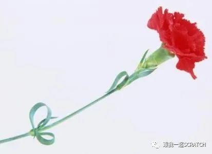 第三二六课 女神节的康乃馨